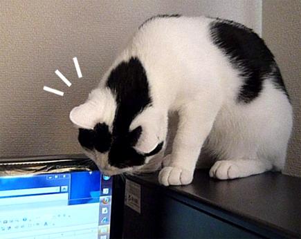 $FF14ってなんなんだろう-モニターと猫