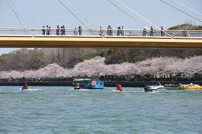 大川桜6DSC_0626 (2)