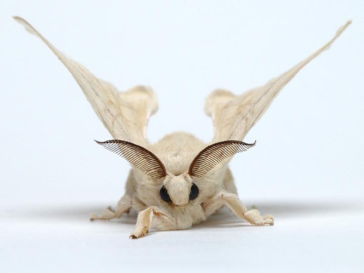 蛾の聠刵osu_f