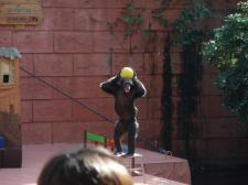 賢いチンパンジー