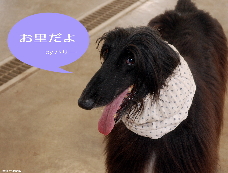 Photo2014_1116_01.jpg