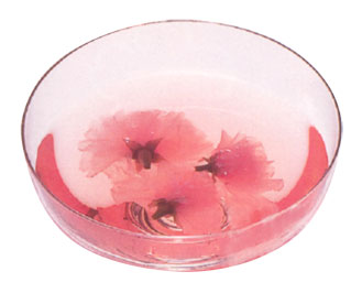 桜花シロップ漬けアップ