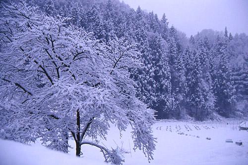 里山の雪1