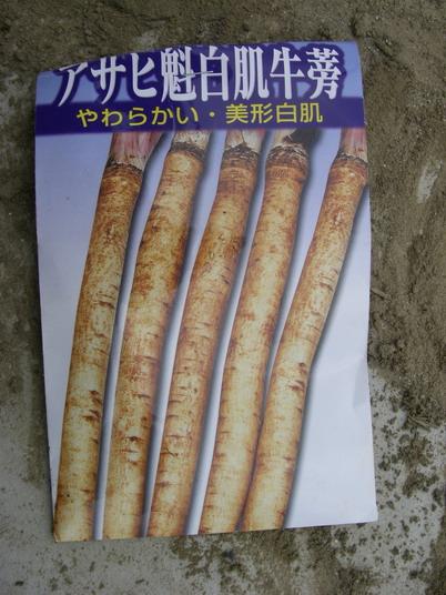 ゴボウ種袋14_01_29