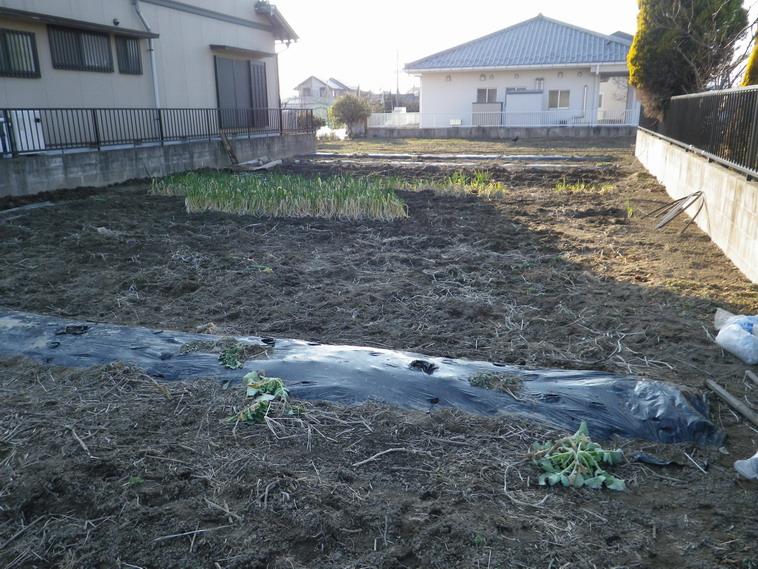 菜園№2_14_01_26