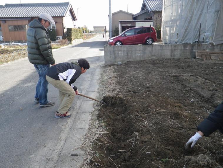 ニラ掘り起こし14_02_11