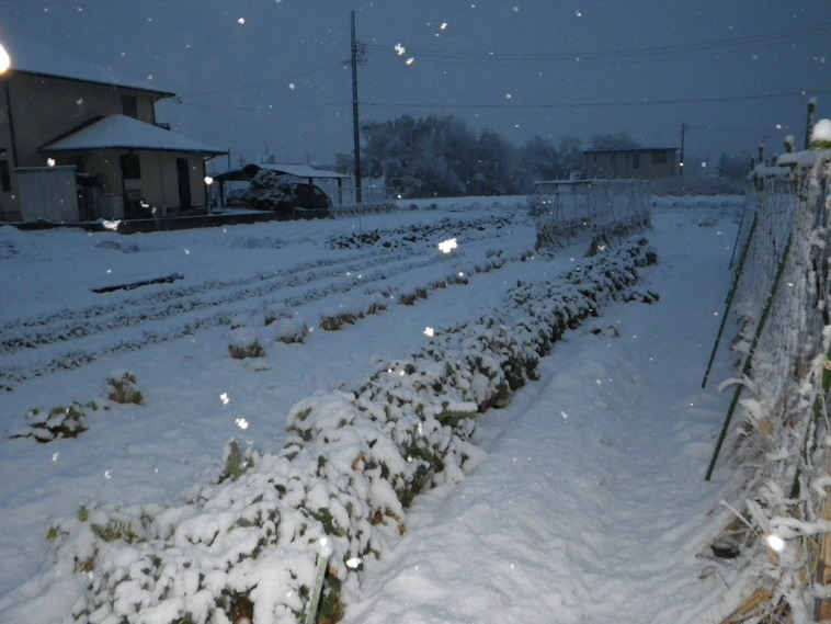 畑の様子14_02_14