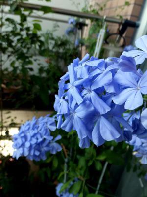 201208day1@fuji02