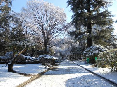 2012 01 24 雪登園