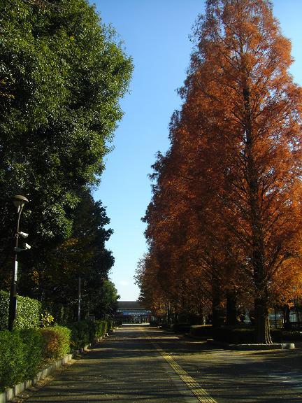 20131207鬼怒川 (11)