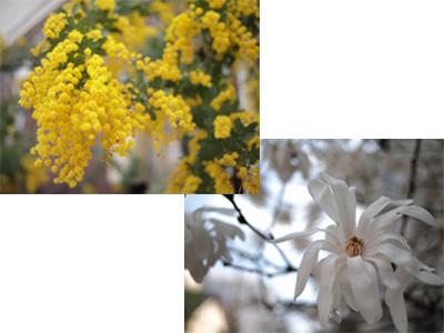 谷中の花々