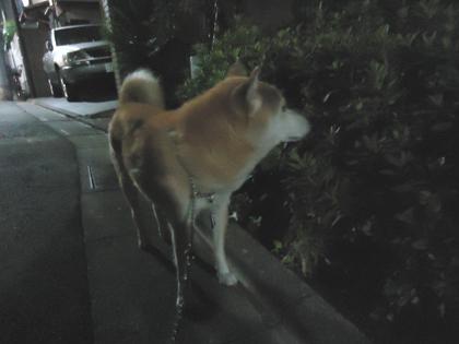 福島県双葉郡浪江町被災犬