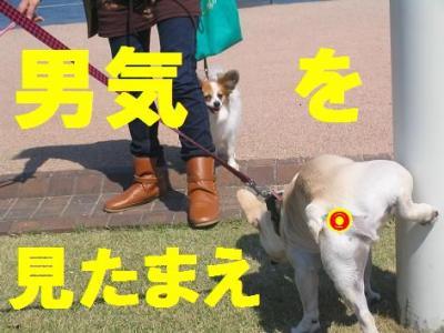 男気wqa