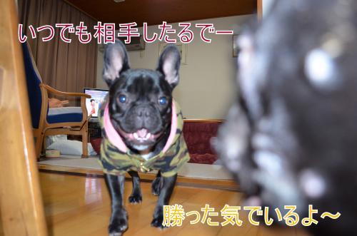 DSC_0286_convert_20121118201017.jpg