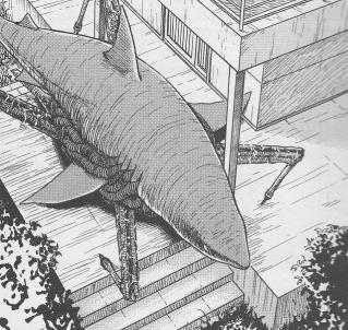 ギョ サメ