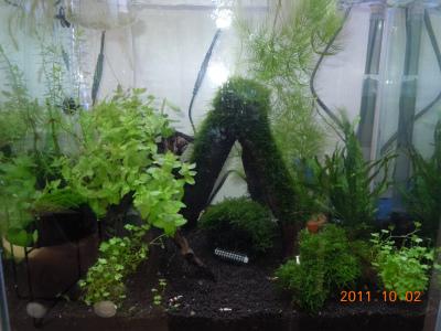 DSCN2529_20111002150039.jpg