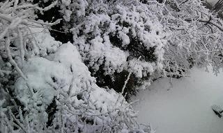 雪Photo2704