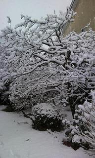 雪Photo2713