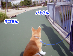 b_20120808_9.jpg