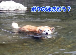 b_20120818_11.jpg