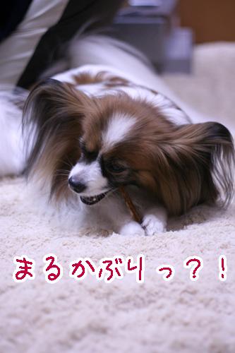 _MG_0142のコピー