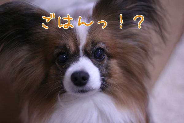 2012.02.06 (3)のコピー