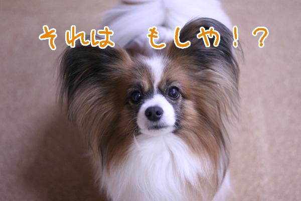 2012.02.06 (1)のコピー