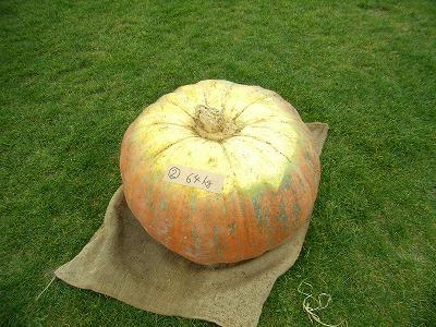大かぼちゃ.jpg