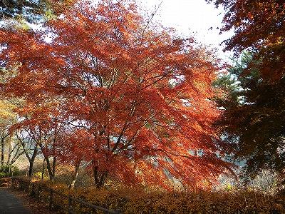 冬桜 077.jpg