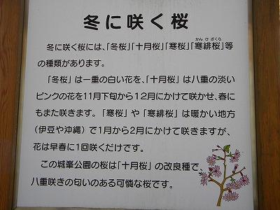冬桜 059.jpg