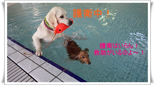 64_20141213030854fa2.jpg