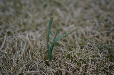 Garden20121209-2.jpg