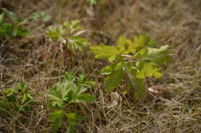 Garden20121209-3.jpg