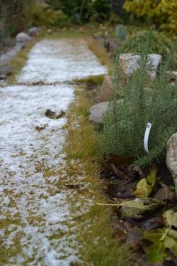 Garden20121209.jpg
