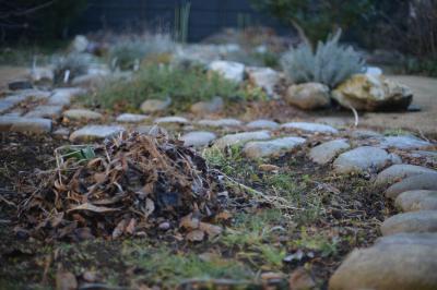 Garden20130105.jpg