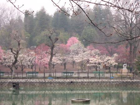 水月公園の梅