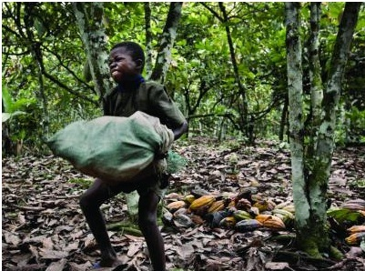 child labor in cocoa farm
