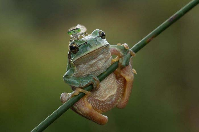 frog with bee.