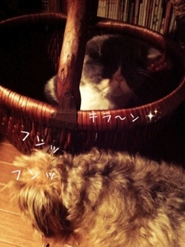 fc2blog_20121006063433847.jpg