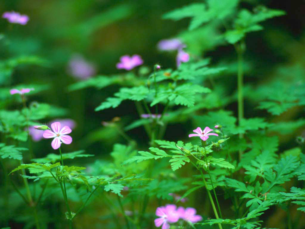 Forest Flowers