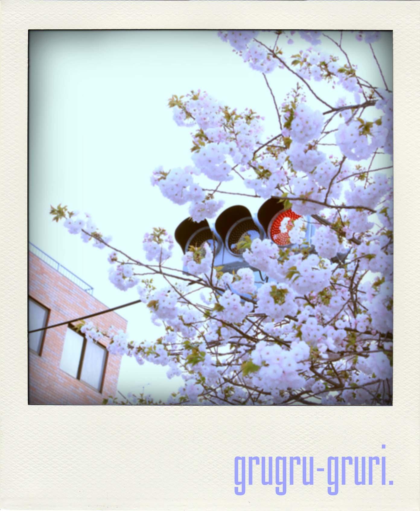 信号きと桜