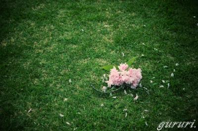 桜ぼってっ