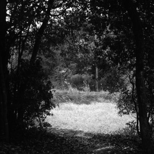 森をぬけて