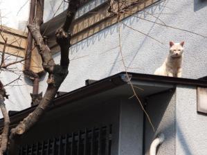 猫18、19