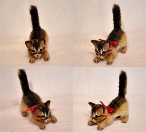 ちび猫5匹2140205 030