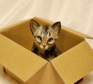 見本猫140217 003