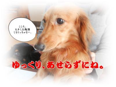 DSCN0852_convert_20140120181735.jpg