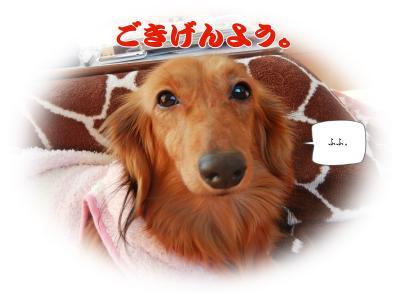 DSCN0868_convert_20140201225854.jpg