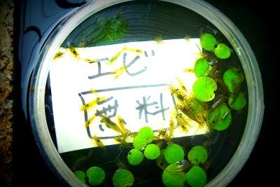 新宿と池袋の間で…(仮)エビ