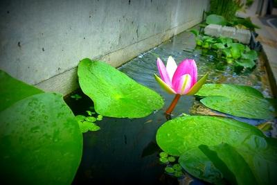 新宿と池袋の間で…(仮)蓮